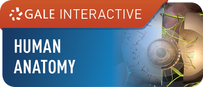 Gale Interactive: Human Anatomy